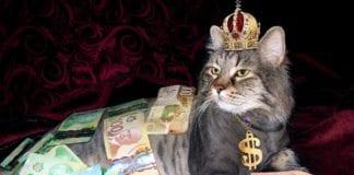 Crowdfunding Animal- Socorro aos Pets