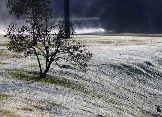 Geadas impactam produção de cana-de-açucar e café