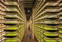 Empresas de alimentos utilizam apenas robôs e encontram